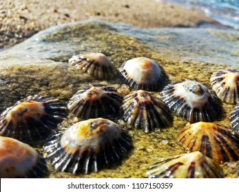 Limpets cling onto a rock by the sea