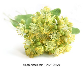 Linden flowers (Tilia) isolated on white