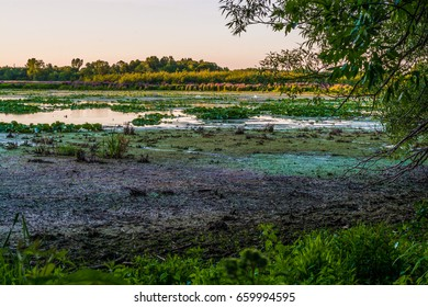 Linden shores wetland marsh featuring green and purple flora