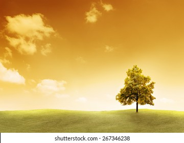 Linden Tree on a meadow with sunset