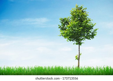 Linden tree in spring grass and sky background