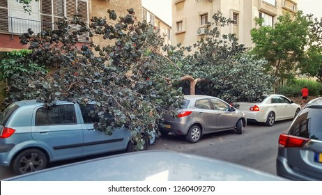 The linden tree with an untrimmed crown cracked into 2 halves in a quiet street. One half of the crown fell forward covering white sedan and the second half fell backward covering the blue hatchback.