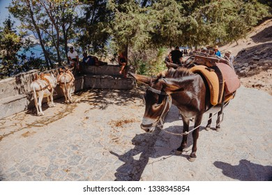 LINDOS, GREECE - SEPTEMBER 8 2018: Donkeys near ruins of Acropolis in Lindos, Rhodes, Greece