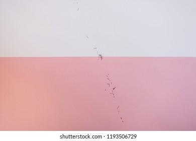 Line of ants walking on a pink and white wall.