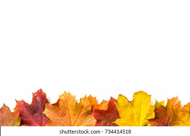 Line of autumn leaves at the bottom with a white background above