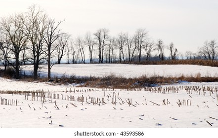 Line of bare trees on a snowy farm in the hills