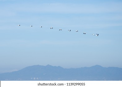 A line of birds flying over a mountainous landscape