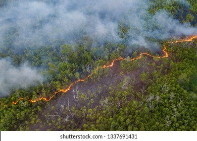 line of bush fire at peatland jungle in Sabah Borneo Malaysia