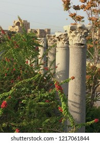 line of corinthians columns  among vegetation pointing in the direction of Byblos fortress built by crusaders on the site of ancien phoenician temple in Jbeil, Lebanon