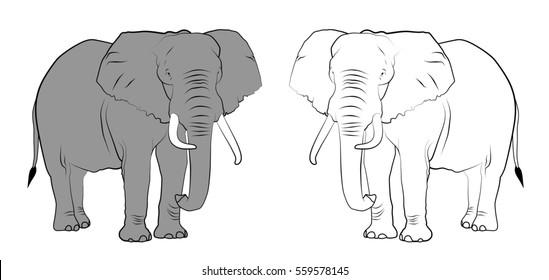 Line Drawing Jaguar : Elephant line drawing images stock photos vectors shutterstock