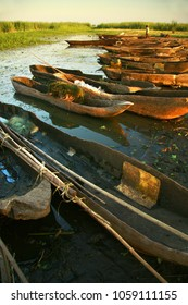 Line of dug out canoes among the reeds  at Mchacha James, Elephant Marsh, Malawi.