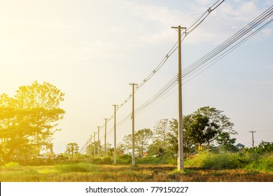 The line of electric poles with cables of electric and internet in the part of rice field with big trees bacjground and flare in the morning or afternoon.