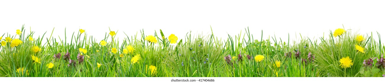 line of grass with wild flowers