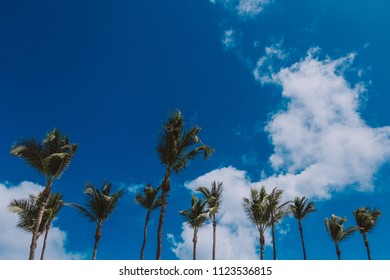 Line of palmtrees at a blue sky