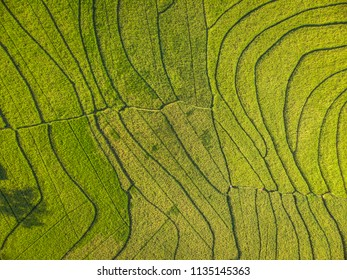 Line pattern green terrace rice field in Aerial Photography view; Yogyakarta, Indonesia - 15 July 2018