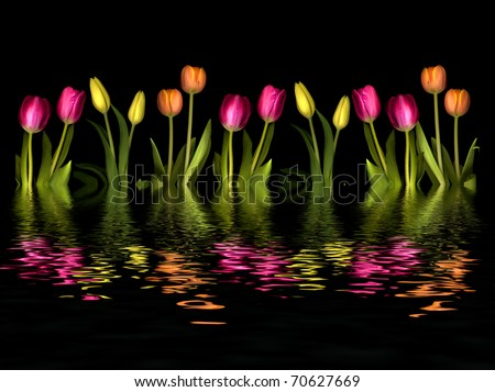 line of pink, yellow and orange tulips reflected