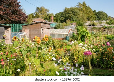 A line of rural allotments show a mix of colourful flowers, garden sheds and greenhouses.