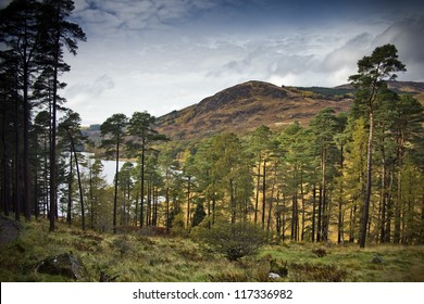 A line of Scots Pines with the sun streaming through by the side of Loch Trool in the Galloway Forest Park, Dumfries and Galloway, Scotland, UK.