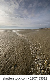 Line of seashells into the beach, Somme Bay, Picardy, France.