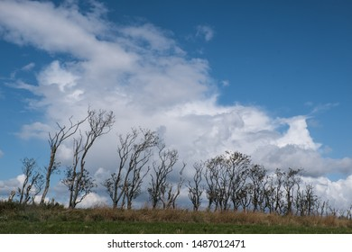 Line of small trees at farmland of Denmark with amazing white clouds at the sky