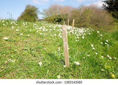 Line of small wooden posts on a grass bank with wild flowers