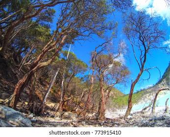 Line of Tree