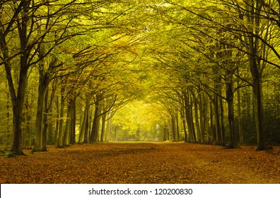 A line of trees in autumn colours arching over a path.