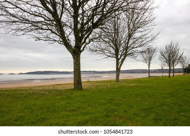 Line of trees on the Swansea coast