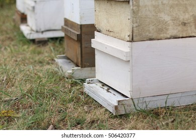 Line Of White And Natural Wood Beehives In Pasture Field With Female Worker Honey Bees On Entrance During The Cold Months Of Fall on A Farm In The Mountains Of South West Virginia
