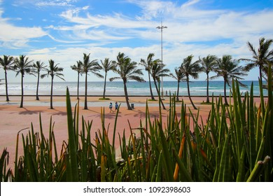 "Lined up palm trees in front of the Indian Ocean Durban ""Golden Mile"" beachfront with a paved promenade, KwaZulu-Natal province of South Africa"