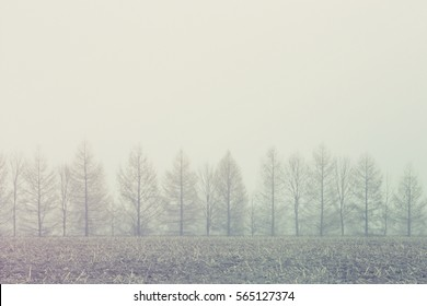 lined trees in the fog