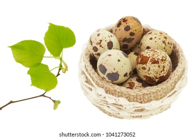 Linen crochet lace basket with Easter eggs isolated on white background. Spring linden tree branch with green leaves and buds and Quail eggs. The photo of Easter, spring, healthy organic food concept