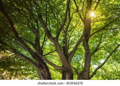 Lines of green trees,Bangkok,Thailand.