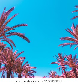 lines of pink palm trees against the sky. bright neon colors. minimal and surreal. summer vacation. urban style