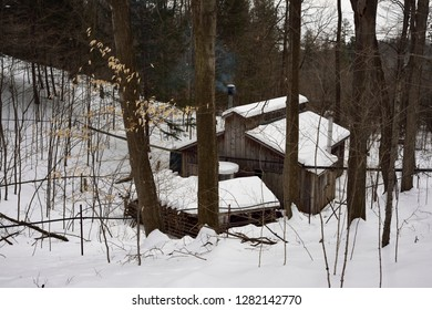Lines of plastic tubing in a sugar bush flowing sap to a collection tank in a sugar shack Kortright Centre for Conservation,  Woodbridge, Ontario, Canada - March 1, 2015