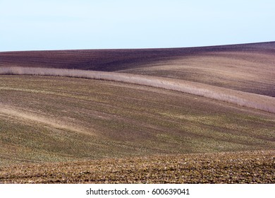 Lines and waves with trees in the South Moravia, Czech Republic.