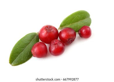 Lingonberries on leaves