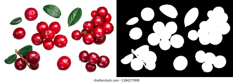 Lingonberry (fruits of Vaccinium vitis-idaea) with leaves, top view