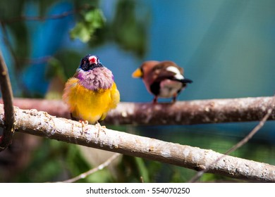 Linseperable parrots on the brunch