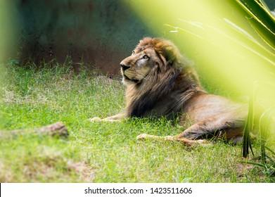 lion animal florest wild animal bug