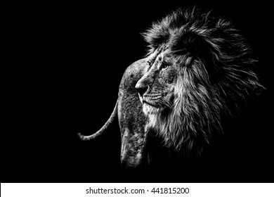 Roaring Lion Images Stock Photos Vectors Shutterstock
