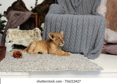 Lion Cub In Christmas Decorations At Home