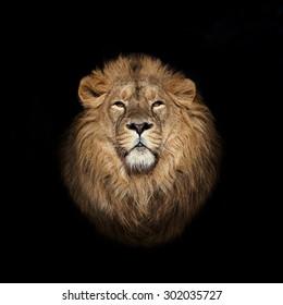 Lion face on black