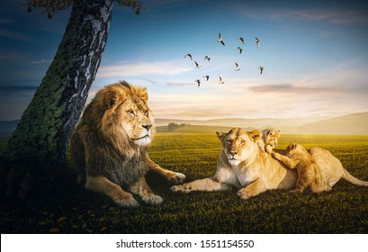 Lion family slouching in the shadow of the tree