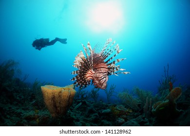 A lion fish and sponge with the silhouette of a diver a sun in the background on a coral reef - Akumal, Riviera Maya - Mexico