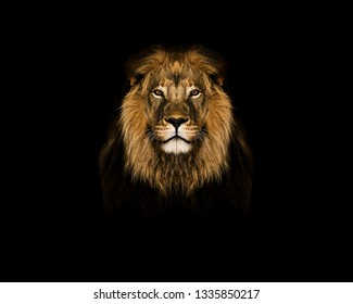White Lion Face Wallpaper Head Images Stock Photos Vectors Shutterstock