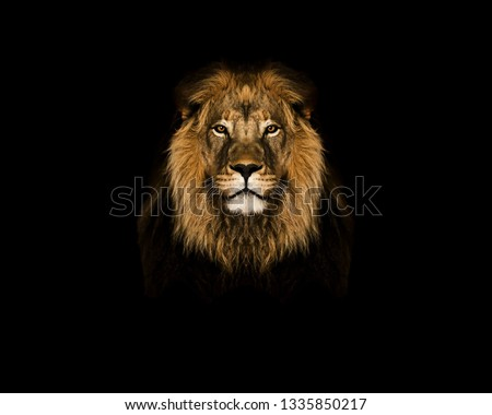 Lion head on black wallpaper