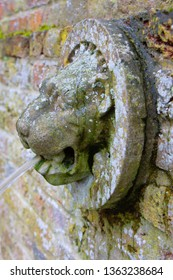 lion head waterspout in an old English garden.