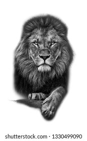 Lion isolated with white background