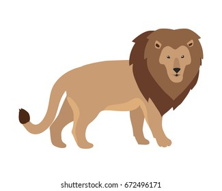 Lion king illustration. Funny lion standing isolated on white background. Animal adorable predator. Cute cartoon. Wildlife character